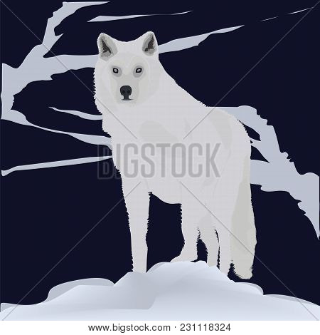 Wolf Winter Dark Background Forest Mountain Snow Abstract Art Illustration Creative Modern Minimalis
