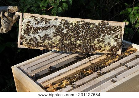 Colorful And Crisp Image Of Honeycomb With Beehive And Beekeeper