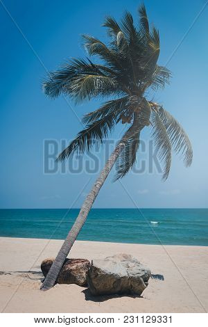 Coconut Palm Tree On The Tropical Beach At Daytime. Vintage Tone