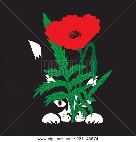 Illustration Of A Black Kitten White Paws Muzzle Tail Tip Hiding Behind A Red Poppy Flower With Gree