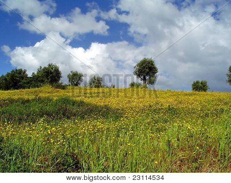Yellow And Clouds