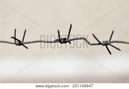 Barbed Wire Outdoors As A Background . In The Park In Nature