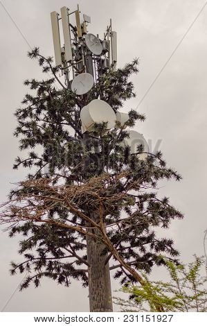 Tree Transformed Into A Transmission Pylon With Antenna And Parables In The Savannah Of The Amboseli