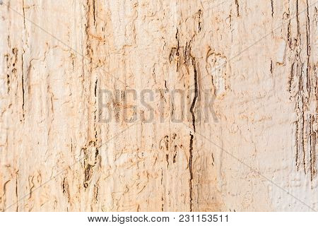Close Up Shot Of An Old Natural Wood Texture Background With Distressed Cracked Paint.