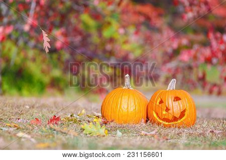 Halloween Pumpkins Outside. Pumpkin Patch. Curved Pumpkin On The Farm Field. The Concept Of Preparat