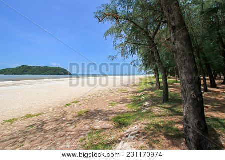 Amazing View Of Beautiful Beach With Tree In The Foreground. Location: Krabi, Thailand, Andaman Sea.