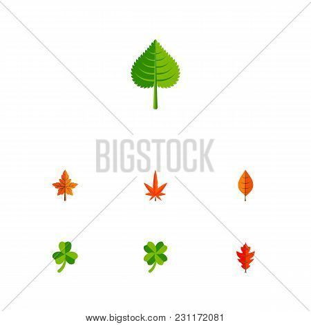 Icon Flat Leaves Set Of Foliage, Leaf, Alder And Other Vector Objects. Also Includes Leaf, Foliage,