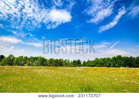 Idyllic english rural landscape with blooming field under a blue summer sky in Southern England UK