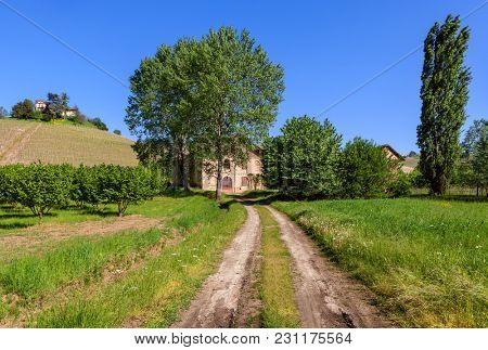 Narrow rural road between green fields as old farmhouse among trees on background in Piedmont, Northern Italy.