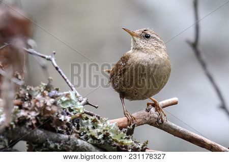 Little Bird From Beginning To Tree. Wren