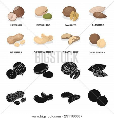 Peanuts, Cashews, Brazil Nuts, Macadamia.different Kinds Of Nuts Set Collection Icons In Black, Cart