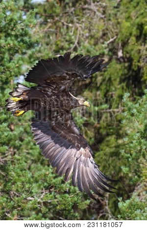 The Eagle Is A Large-scale Nesting Bird