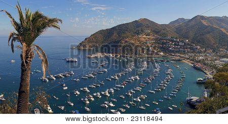 Catalina Island CA. Avalon