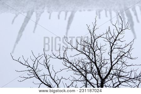 Tree Branches Touch Icicles On Background Cloudy Sky.