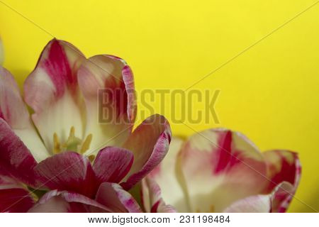 Blurred Flower Background.beautiful Flowers Over Yellow Background With A Lot Of Copy Space For Text