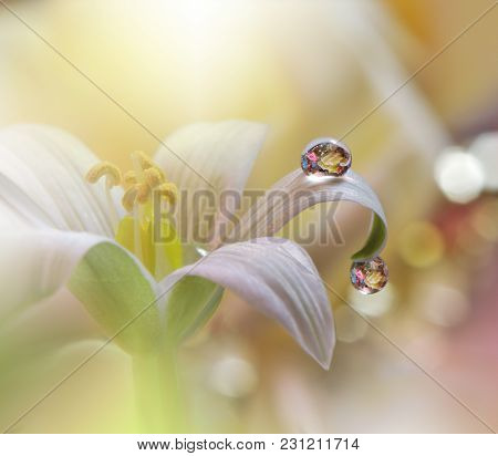 Abstract Macro Photo With Water Drops. Tranquil Abstract Closeup Art Background. Artistic Background
