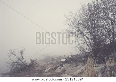 Landscape with bush and fog over tree