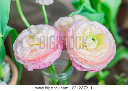 Closeup Of Pastel Pink Ranunculus Flowers In Transparent Glass Vase On Green Background