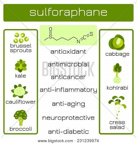 Infographics. Sulforaphane Organic Compound Of Plant Origin With Anti-cancer And Antibacterial And O