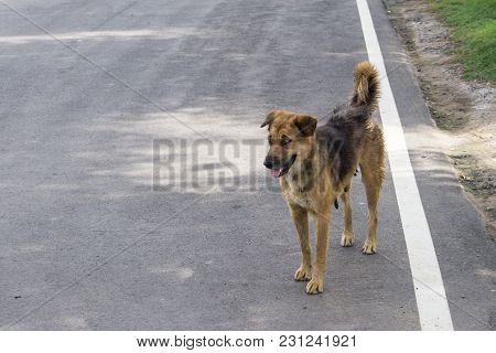 Homeless Stray Dog On Street., With Copy Space For Text.