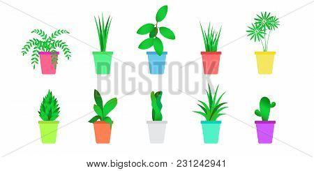 Flat Indoor Plants Set. Isolated Vector Of Home Flowers
