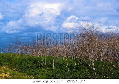 Lush Green Field On Rural Grasslands With Storm Clouds Beyond