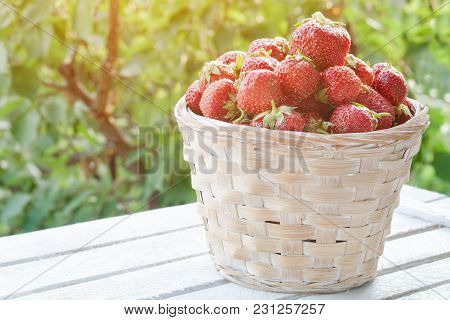 Strawberry Basket On A Green Background. Sunlight In The Garden