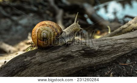 Branching Creeping Snail, Background In The Forest, Quiet Scenery