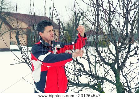 White Middle-aged Man Is Pruning Trees In The Spring. Seasonal Care Of The Garden. Toned Image.