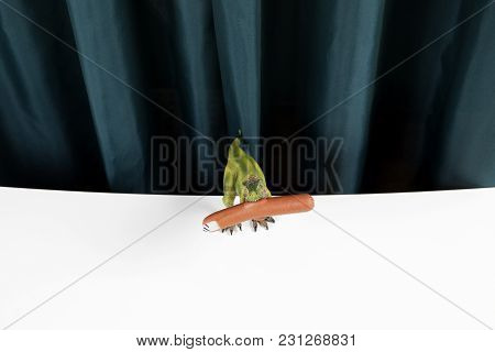 Curtain Dinosaure Eating Sausage Manicure