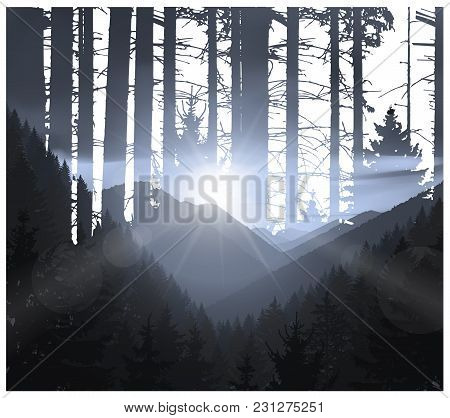 Abstract Nature Background. Mountains Panorama And Silhouette Of Trunks. Evening In Wild Woodland.