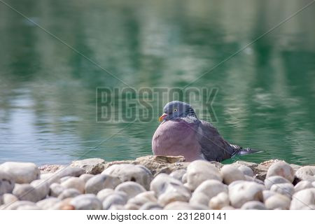 Zen Garden Serene Nature Image. Serene Bird By Ornamental Pond. Peace And Tranquility For A Lucky Pi