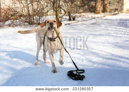 Cute funny dog walking outdoors on winter day