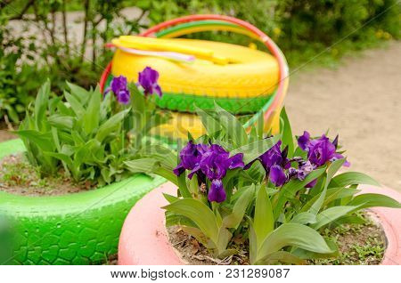 Blossoming Irises In A Homemade Vase