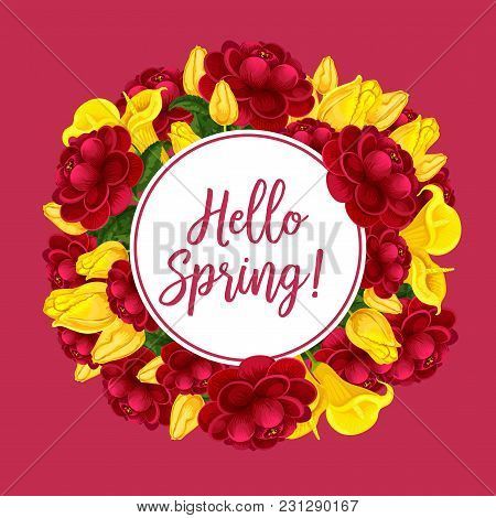Springtime Seasonal Greeting Card Of Flowers Bouquets. Vector Floral Design Of Blooming Tulips Or Ca