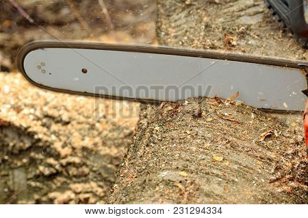 Close-up Detail Of The Chain Saw Cutting The Log