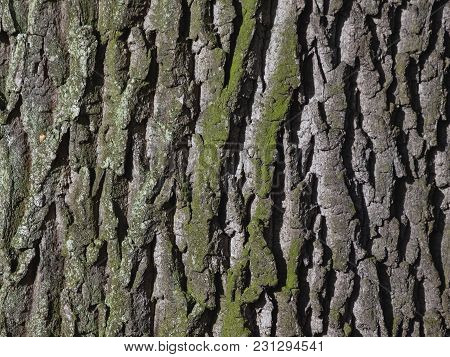 Natural Texture Is A Rough Tree Bark With Veined Green Moss.