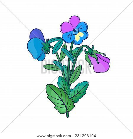 Cute Pansies On A White Background.bouquet. Floral Seamless Pattern With Flowers Of Different Colors