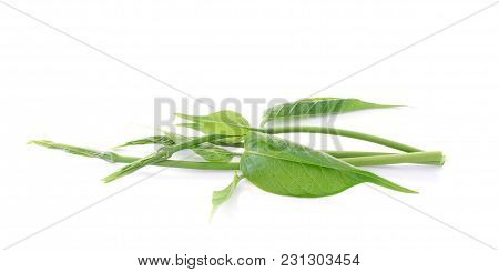 Gymnema Sylvestre Isolated Close Up On White Background