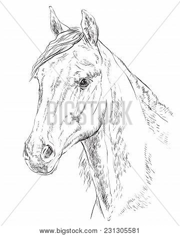 Arabian Horse Portrait. Horse Head  In Profile In Monochrome Color Isolated On White Background. Vec