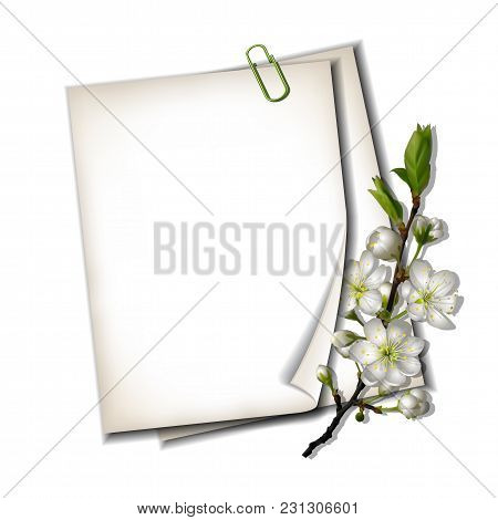Two White Blank Sheets Of Paper With Blossoming Cherry Branch Isolated On White Background, Top View