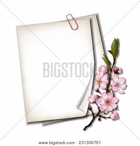 Two White Blank Sheets Of Paper With Blossoming Sakura Branch Isolated On White Background, Top View