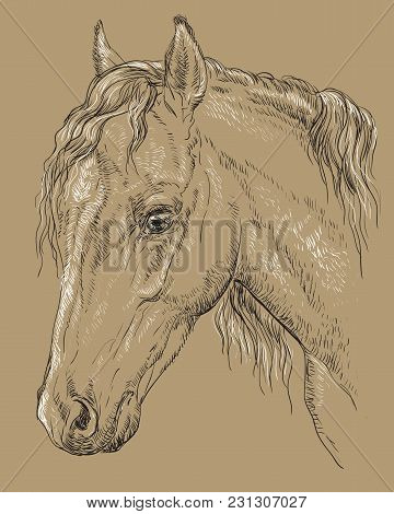 Welsh Pony Portrait. Horse Head  In Profile In Black And White Colors Isolated On Beige Background.