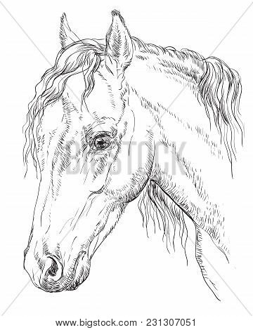 Welsh Pony Portrait. Horse Head  In Profile In Monochrome Color Isolated On White Background. Vector