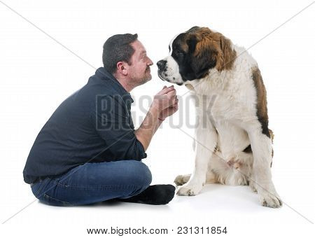 Young Saint Bernard And Owner In Front Of White Background