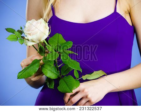 Young Woman Holding White Rose Flower In Hand. Valentines And Womens Day, Gift Concept.