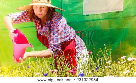 Gardening. Attractive Woman In Hat Red Apron Working In Her Backyard Garden Watering Flowers Outdoor