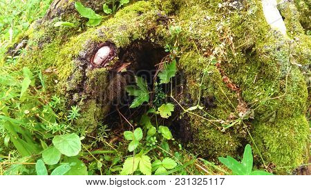 Forest Cave.a Forest Cave And Leaves Of Grapes Near It.