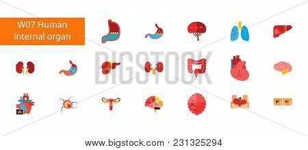 Nineteen Internal Organs Flat Vector Icons Collection On White Background. Can Be Used For Topics Li