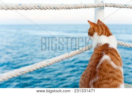 Lonely Red Cat Looking Away Sitting And Waiting On Harbor Of Mediterranean Sea Coastline. View From